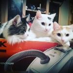 Помогите спасти жизнь 3 котам