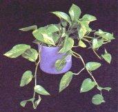 Растения именно вьющиеся растения