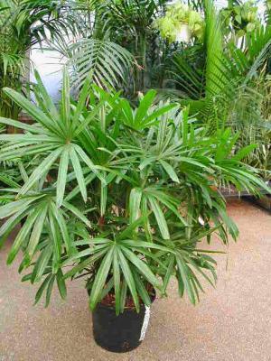 Цветы из бисера орхидея схема фото 971